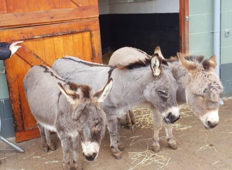 Wonkey Donkey photo